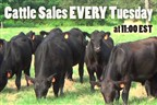 Cattle Auction Every Tuesday 11:00  AM ET